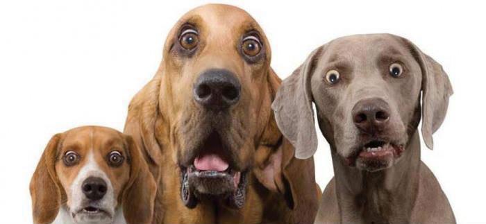 удивленные собаки