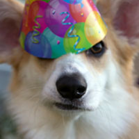 собака-именинница