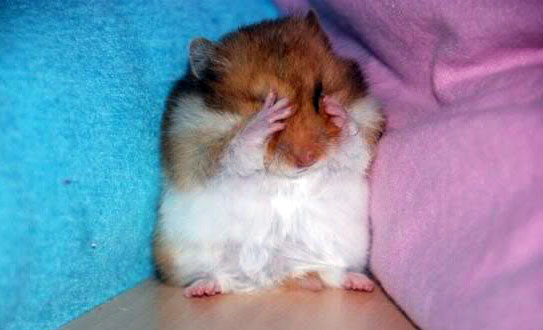 hamsterf